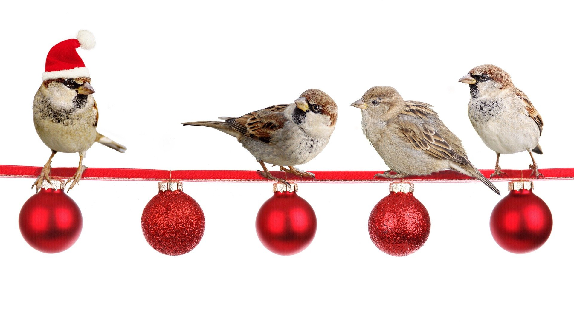 4 Sparrows Sitting on a red rope with baubles